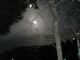 雪の中の月.jpg