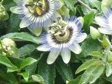 面白い花.jpg